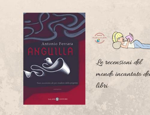 """""""Anguilla"""", di Antonio Ferrara"""