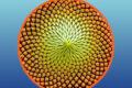 Natura e matematica:il regno vegetale e la successione di Fibonacci