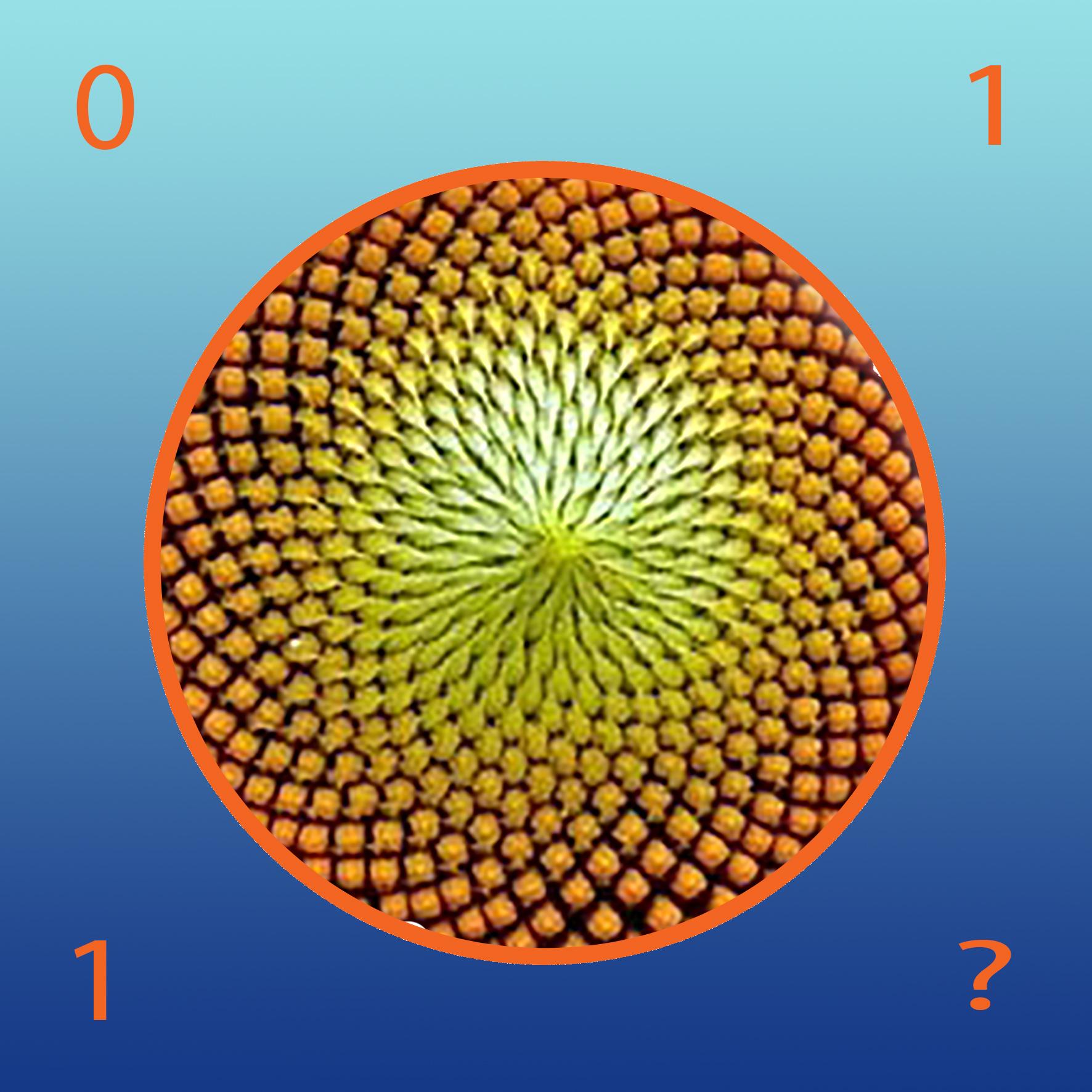 Natura e matematica:il regno vegetale e la successione di ...